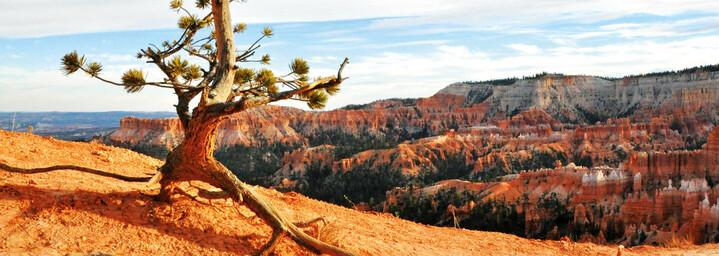Bryce Canyon Nationalpark USA