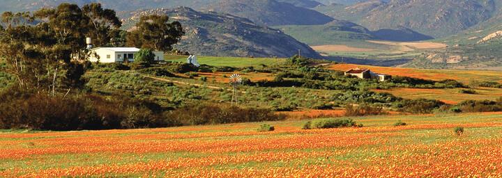 Namaqualand Blütenmeer Südafrika