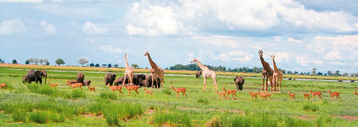 Tiere im Chobe Nationalpark