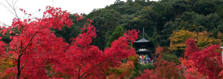 Reisebericht Japan - Kyoto