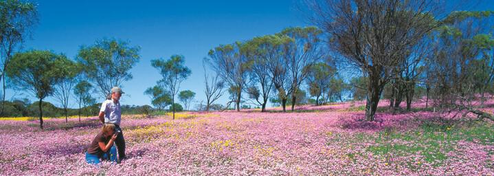 Blumenwiese Geraldton