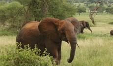 Tarangire & Ngorongoro