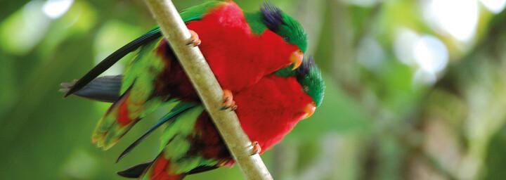 Vögel Atiu Villas Cook Islands