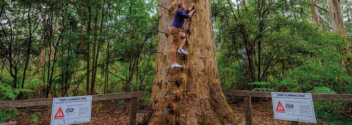 Pemberton Gloucester Baum
