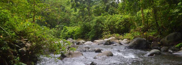 Lombok Reisebericht - Dschnungel auf Lombok