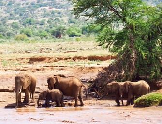 Kenia Reisebericht - Elefanten im Samburu Nationalreservat