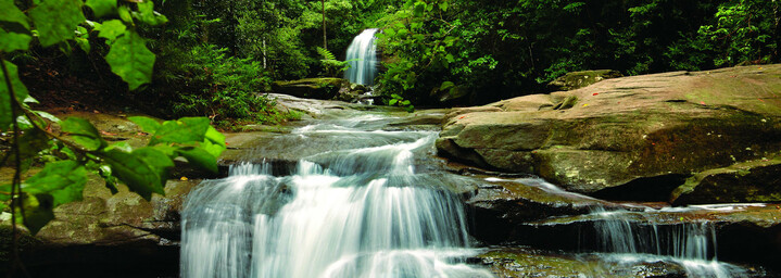 Kondalilla Falls Nationalpark Queensland