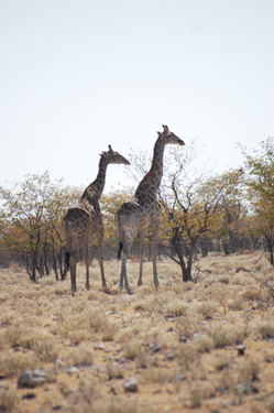 Namibia mit Kindern Reisebericht: Etosha Nationalpark