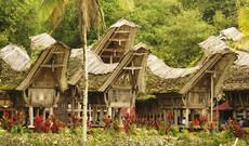 Sulawesi - Land der Toraja