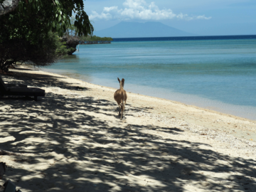 Strand im West Bali Nationalpark