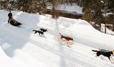 """Hundeschlittenfahrt """"Trapper's Run Dogsled Tour"""""""