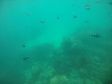 Reisebericht Seychellen - Unterwasserwelt Seychellen