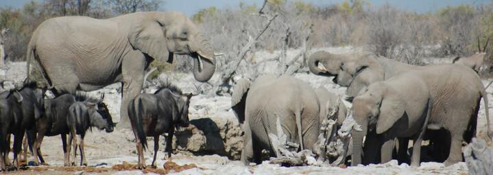 Reisebericht Namibia: Tierwelt im Etosha Nationalpark