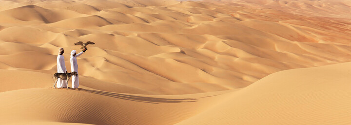 Falken in der Wüste