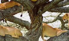 Naturwunder Tansania inkl. Flug
