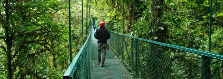 Monteverde - Brücke im Nebelwald Costa Rica