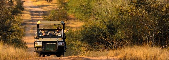 Safari im Krüger Nationalpark