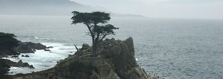 Reisebericht Kalifornien - Lone Cypress, Pebble Beach, 17-Mile-Drive