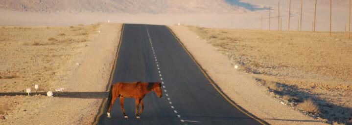 Reisebericht Namibia: Wüstenpferd von Garub