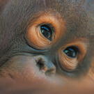 Malaysia: Naturwunder Borneos