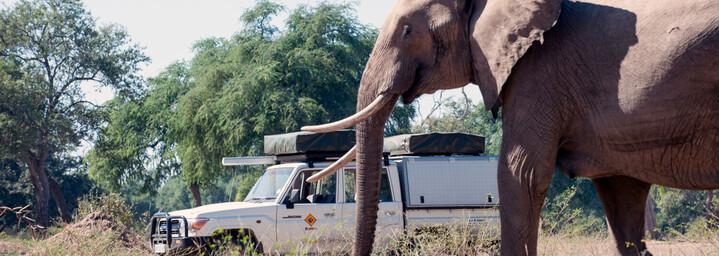 Bushlore Camper Elefant