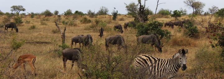 Tierwelt im Krüger Nationalpark