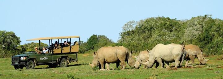 Gamedrive im Shamwari Game Reserve