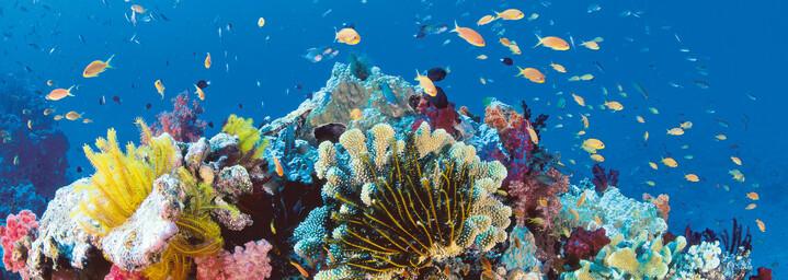 Korallenwelt Great Barrier Reef