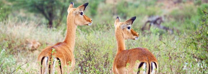 Kenia Reisebericht - Samburu National Reserve