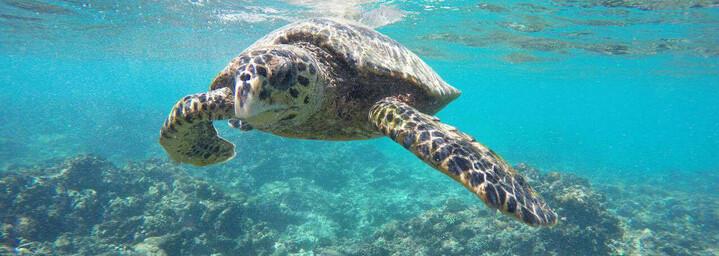 Seychellen Reisebericht - Wasserschildkröte