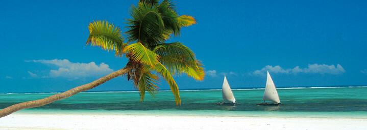 Strand auf Sansibar mit Palme und Dhows