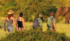 Mobile Camping & Wandersafari