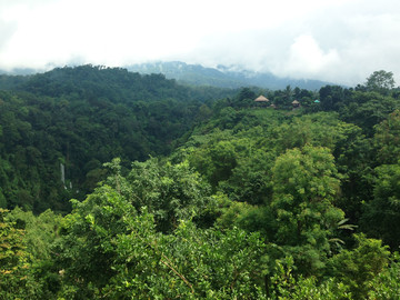Lombok Reisebericht - Dschungellandschaft auf Lombok
