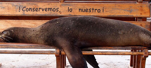 Quito & Galápagos entdecken inkl. Flug
