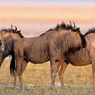 Tierparadiese Namibia & Botswana