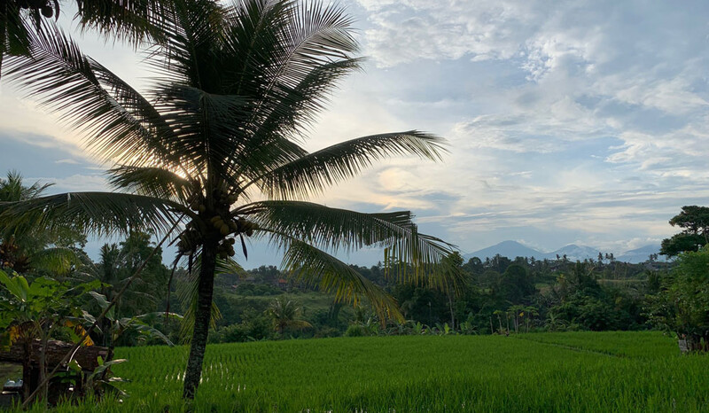 Reisebericht Bali Campuhan Ridge Wandergebiet bei Ubud