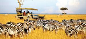 Pirschfahrt durch Zebraherde