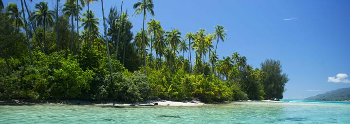 Moorea Palmenstrand und Meer