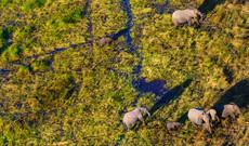Chobe & Okavango Delta