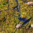 Safari-Abenteuer & Viktoriafälle