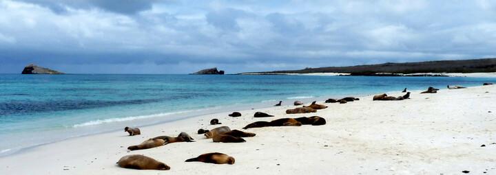 Ecuador und Galápagos Reisebericht - Seelöwen am Strand