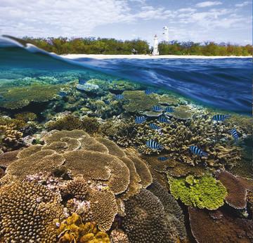 Reisebericht Australien: Korallenriff vor der Insel Lady Elliot