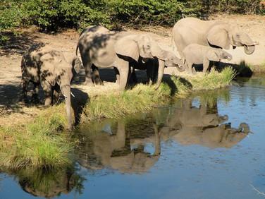 Südafrika Reisebericht: Elefanten am Wasserloch im Mashatu Game Reserve