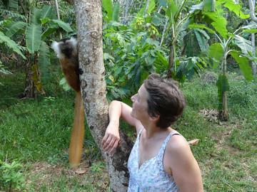 Madagaskar Reisebericht: Lemur im Lokobe Naturreservat