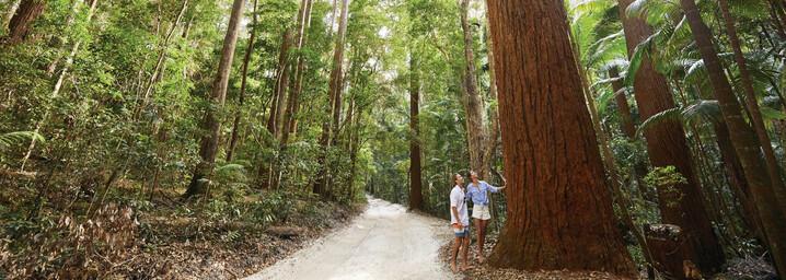 Regenwald Fraser Island