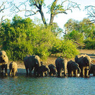 Tierparadiese Namibia & Botswana inkl. Flug