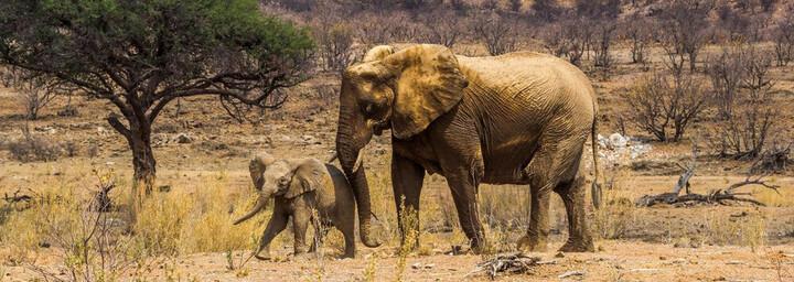 Elefanten Damaraland