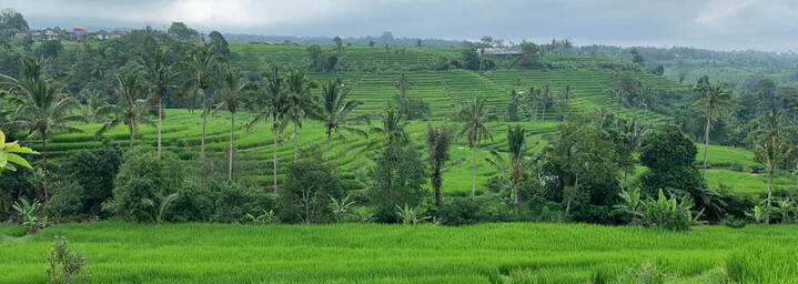 Jatiluwih Reisterrassen Bali