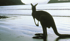 Mietwagentour auf Kangaroo Island