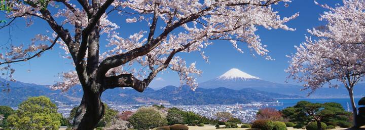 Fuji San zur Kirschblüten Zeit